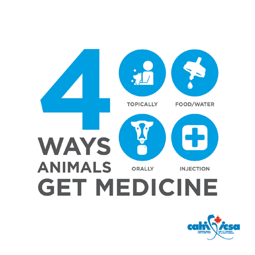 4 ways animals get medicine: Topically, food/water, orally, injection.